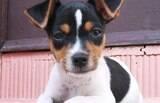Cachorros esportistas: saiba quem são eles e conheça as principais raças