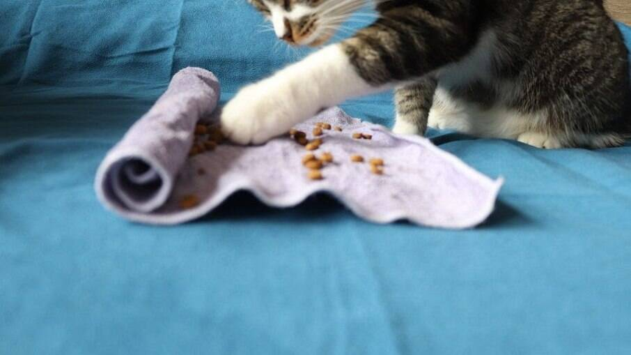 Uma toalha ou um pano de prato velho também será útil na hora de dar entretenimento aos peludinhos