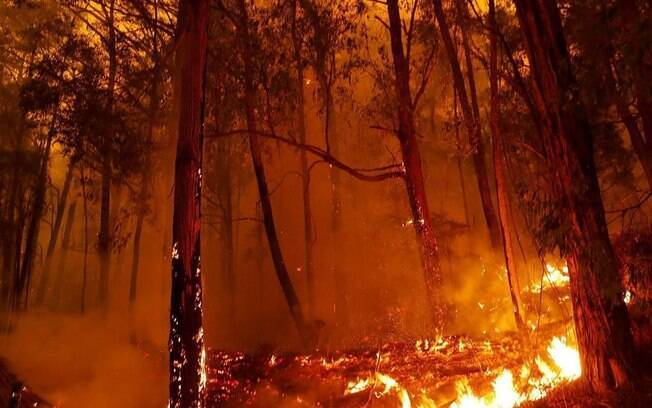 Fogo já devastou diversas áreas e matou pessoas e animais em todo o país