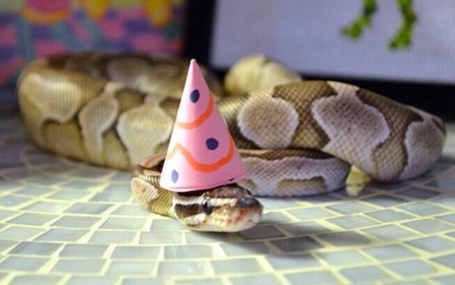 Cobra de chapéu.