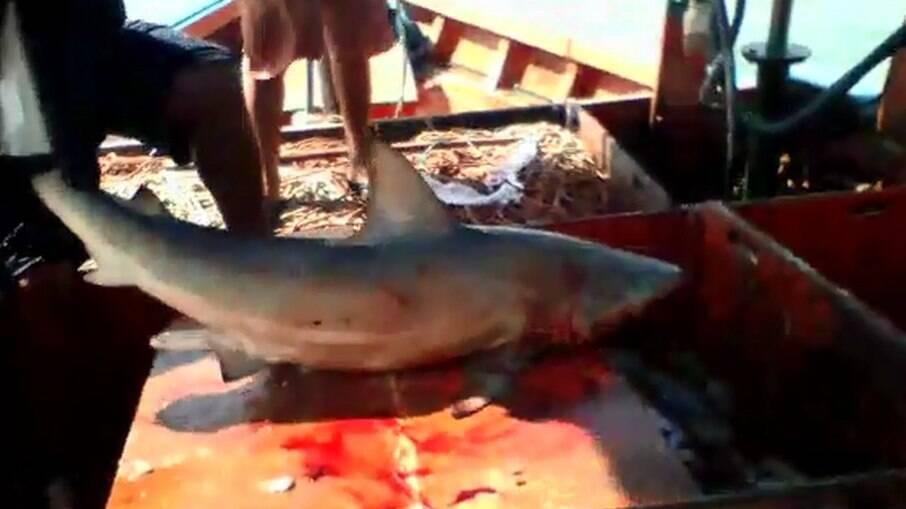 Tubarão mordeu pescador em alto mar, a 2km da costa paraense