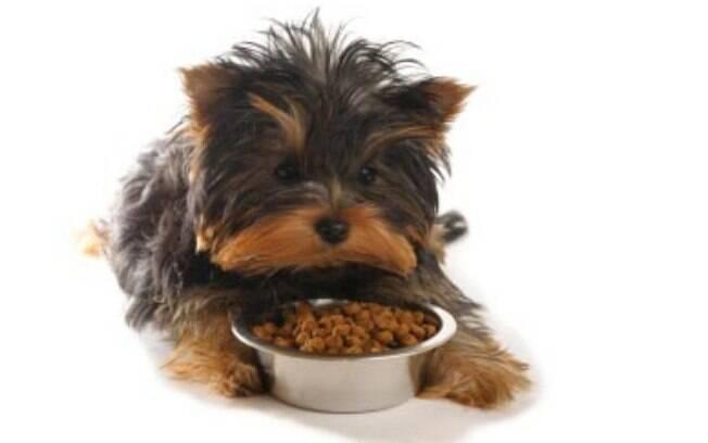 Existem vários tipos de rações, inclusive uma especial de dieta para cães