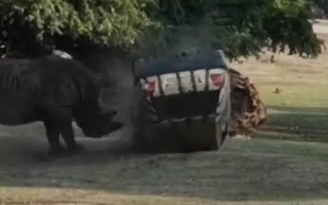Rinoceronte virou veículo diversas vezes