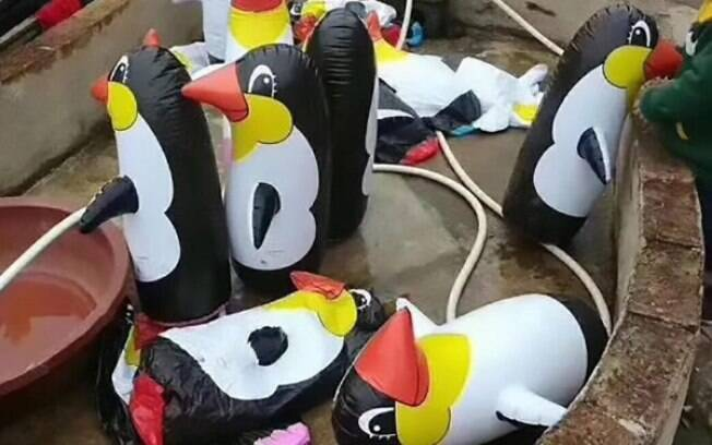 A atração do zoológico era na verdade alguns pinguins infláveis