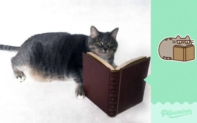 O gatinho culto.