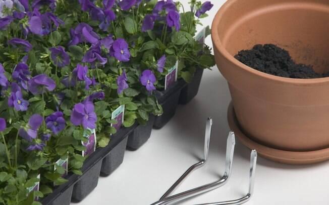 Românticos, os nativos de câncer se darão muito bem no cultivo de violetas