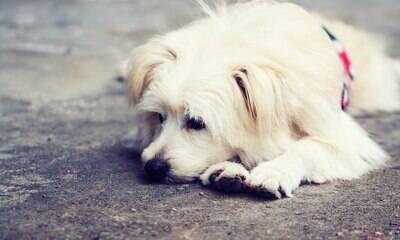 Violência animal não se restringe apenas aos maus-tratos físicos