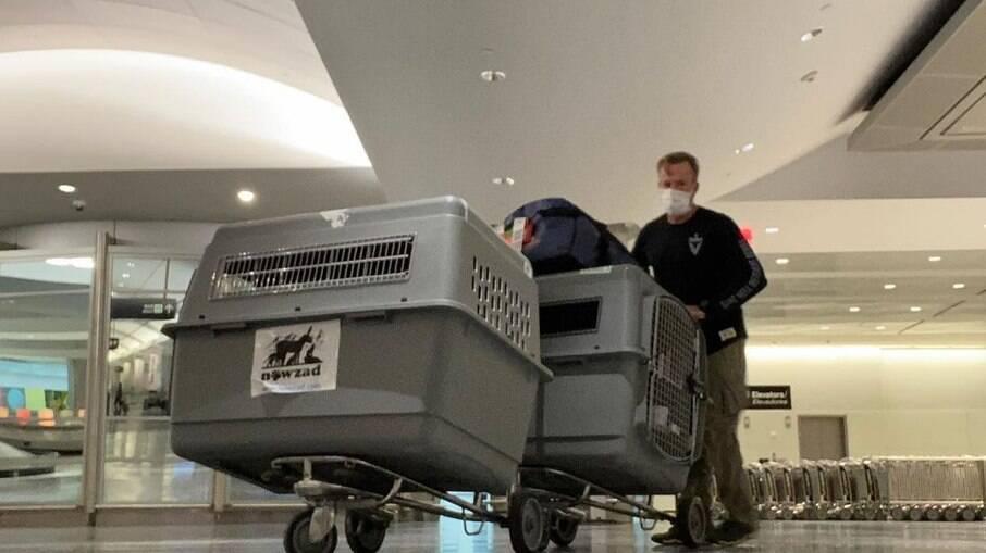 Cães e gatos de abrigo serão retirados do Afeganistão