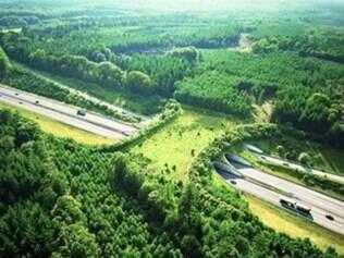 As novas passagens poderiam evitar acidentes de trânsito envolvendo animais silvestres