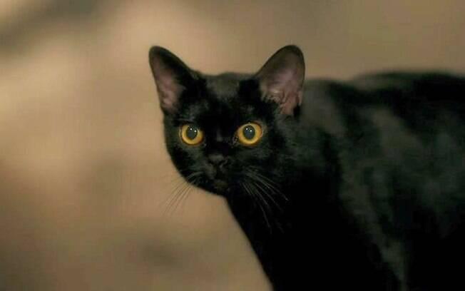 O gato León em