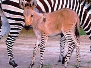 O pequeno animal que chamou a atenção do mundo vive em um zoológico do México