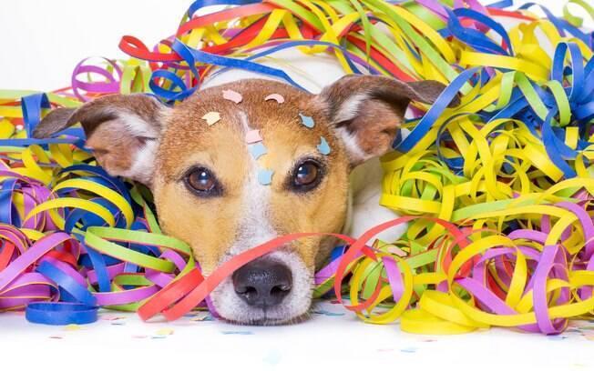 Espumas, bebidas alcóolicas e outras coisas presentes no Carnaval podem ser prejudiciais para seu animal de estimação