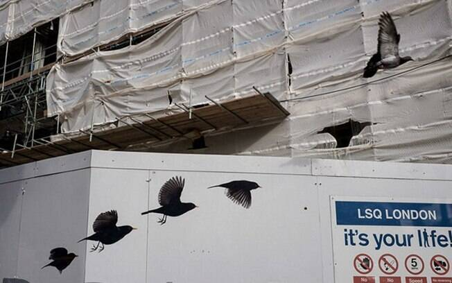 Pássaros voando próximos a um prédio construção