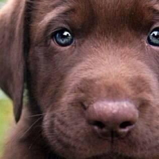 Para evitar que o animal desenvolva algum tipo de problema é preciso manter o cachorro de apartamento ocupado