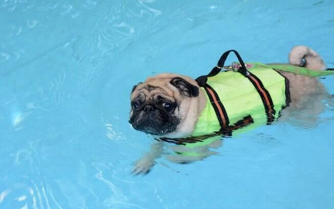 Compre equipamentos de segurança para garantir que seu cão não se afogue