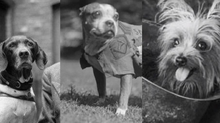 Judy, Stybby e Smoky foram animais de estimação de soldados e heróis de guerra