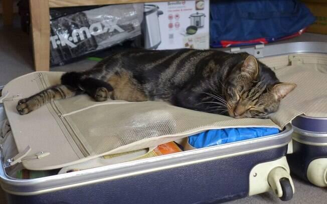 Ninguém imaginava que o gatinho poderia esconder um segredo, nem os donos
