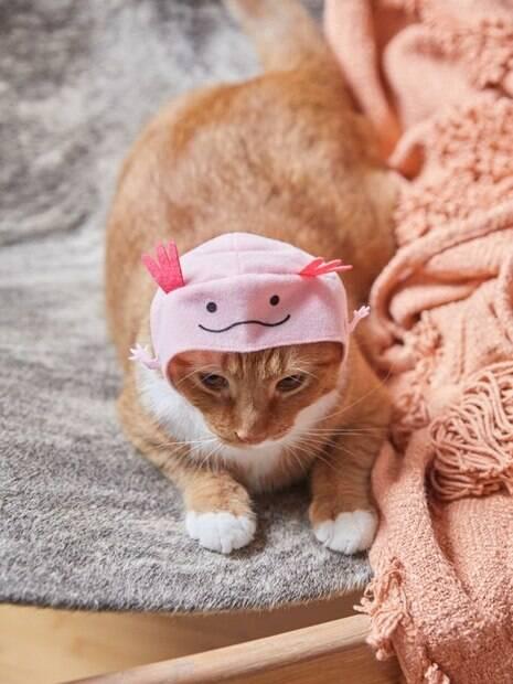 Chapéu marítimo para gatos