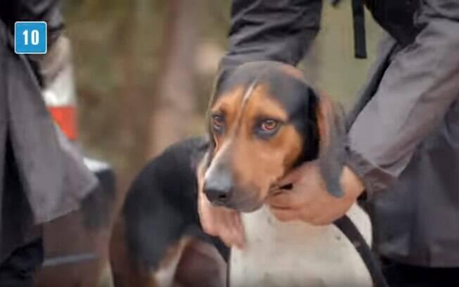Barão é um dos cães que mais encontra animais desaparecidos