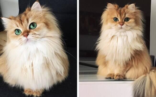 Gata Smoothie é considerada a mais fotogênica do mundo.