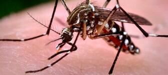 Epidemia de zika vírus na Colômbia chega ao fim, dizem autoridades