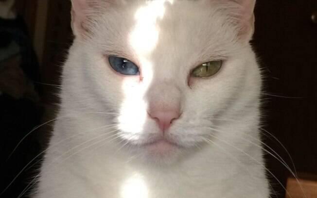 Esse gato está te encarando pelo simples motivo de você ter esquecido de alimentá-lo há 5 minutos