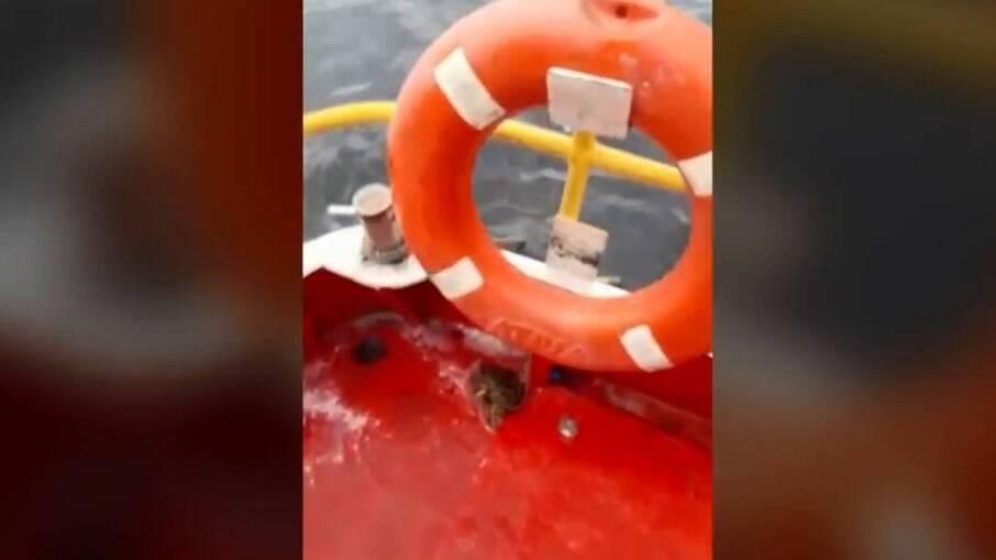 Baleia jubarte quase virou barco na Baía de Guanabara