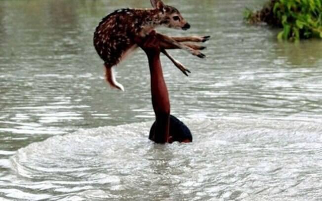 Filhote de cervo sendo salvo durante enchente.