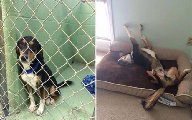 Cachorro bem triste atrás de grades e bem feliz com a liberdade.