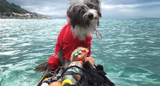 Homem viaja pelo mundo de caiaque ao lado de cão