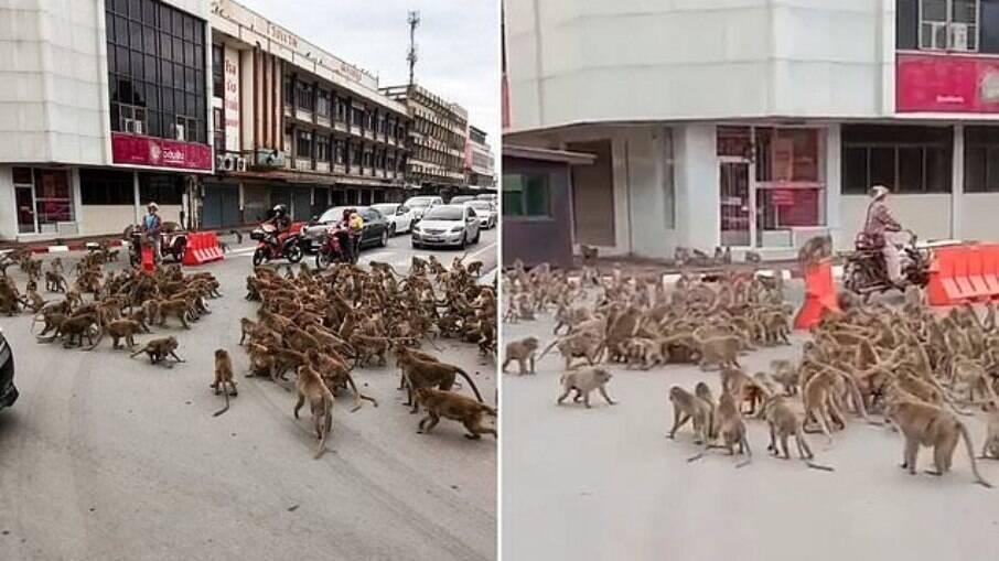 Confronto entre grupos de primatas ocorreu em Lopburi, no centro, em frente às ruínas de um templo budista