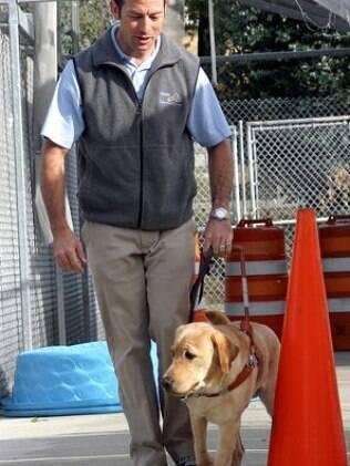 Cão-guia é apenas uma das classificações dos cães de assistência