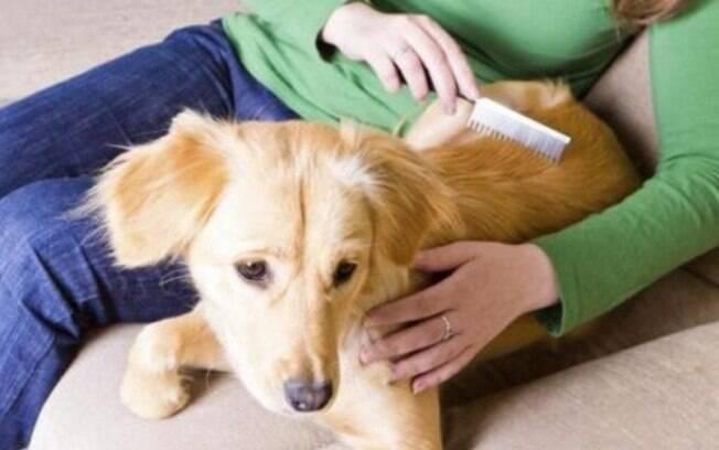 Passar uma solução caseira e depois pentear o pelo do animal pode ajudar a eliminar as pulgas