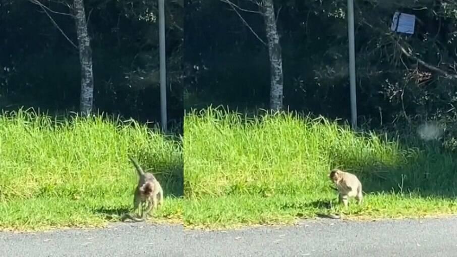 Gato encara serpente em beira de estrada
