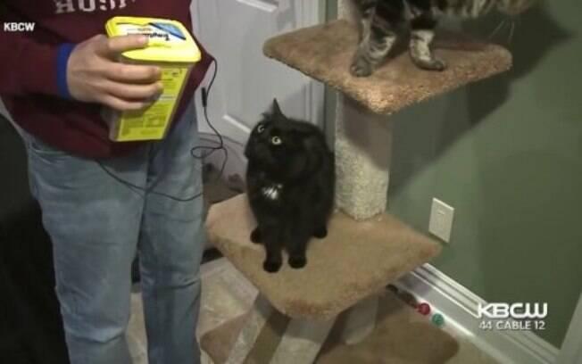O pai de Victoria e David são quem cuidam na maior parte do tempo das gatas, enquanto estudante as visita sempre que pode
