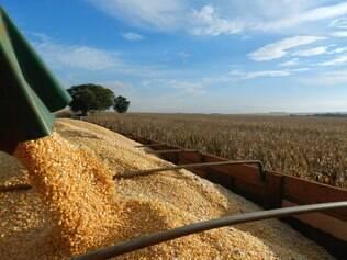 Safra de grãos: levantamento de junho apresenta ajustes mínimos em relação as projeções da Conab divulgadas em maio, para o Mato Grosso do Sul