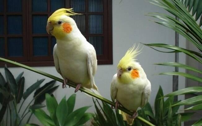 Conheça os sintomas e tratamentos das principais doenças de pássaros
