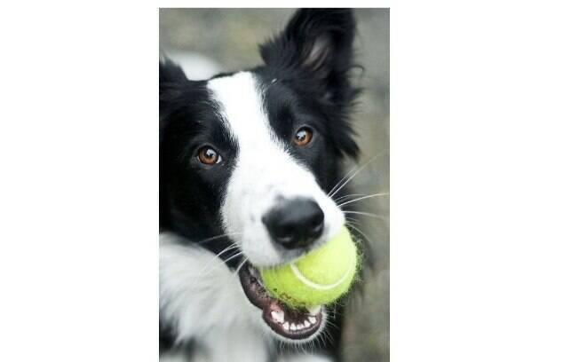 Cachorros abandonados poderão ajudar como gandulas