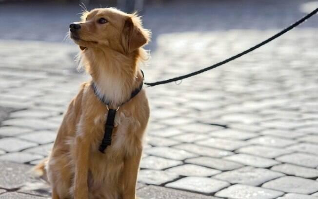 O animal precisará se comportar adequadamente para receber o que deseja, seja um passeio ou um petisco