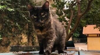 Gatil em parque tem dezenas de gatos adultos para adoção