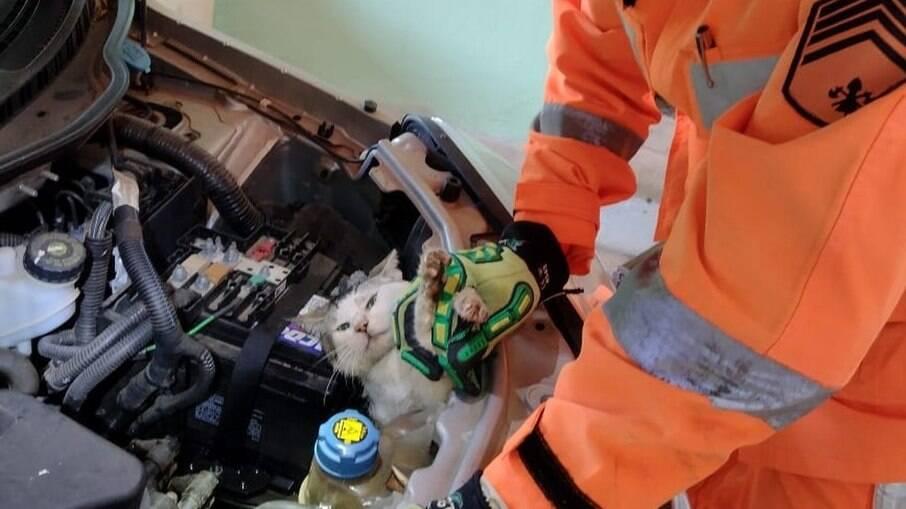 Gato é resgatado de motor de carro por bombeiros em Minas Gerais
