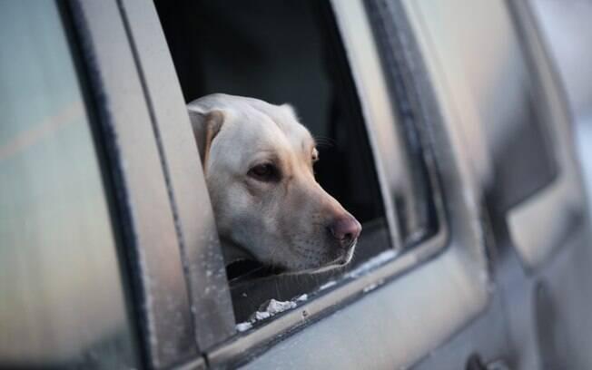 O cão precisa se acostumar com o carro desde filhote, assim evitar que passe mal em viagens