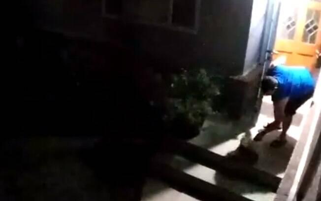 Gato com saco na cabeça