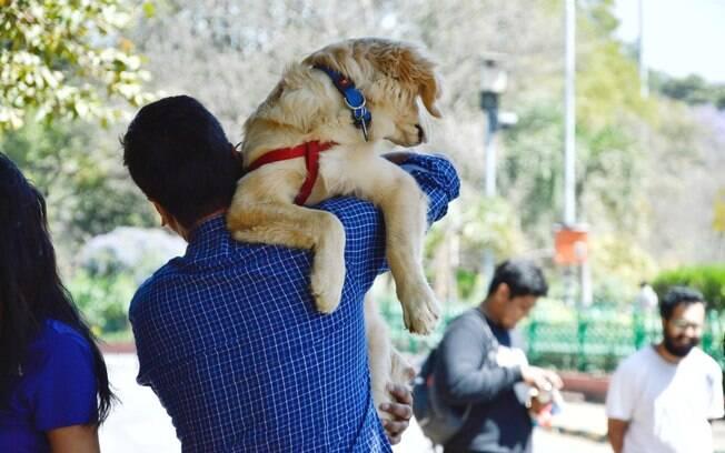 A inclusão dos pets na família brasileira está fazendo com que eles sejam incluídos também no Direito