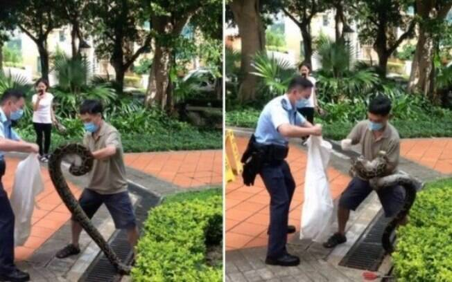 Morador e segurança aprisionam píton em Hong Kong