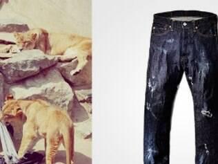Animais são responsáveis por acabamento final de peças jeans.