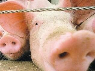 Carne suína foi destaque na pauta de exportações de Minas Gerais