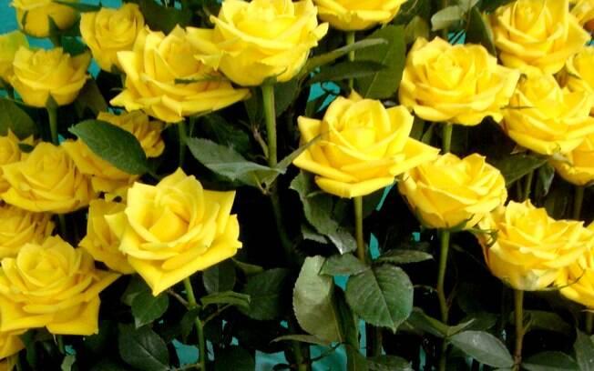 Rosa Júpiter é Mais Uma Variedade Bastante Disputada Entre Os ~ Cultivo Rosas Jardim