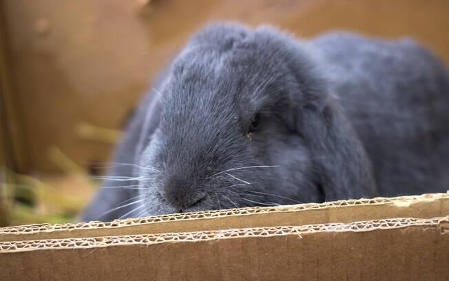 Confeccione você mesmo brinquedos para coelho e garanta a diversão do bichinho