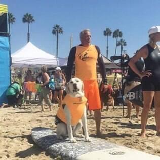 Campeonato de surfe para cachorros agitou praia da Califórnia